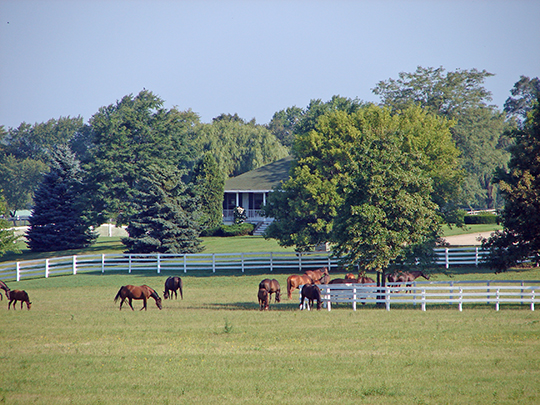 Horse Farm in Barrington Hills, IL.